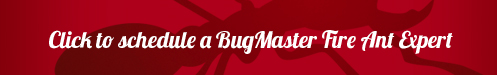 BUG_fireant_webpageschedule_button2