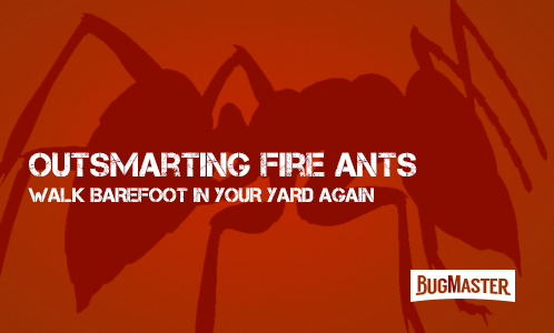 BUG-fire-ant-program-outsmart