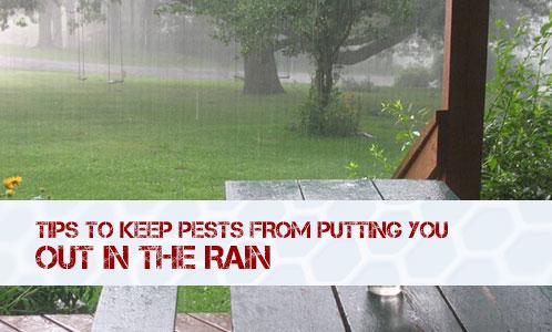 BUG_Rain