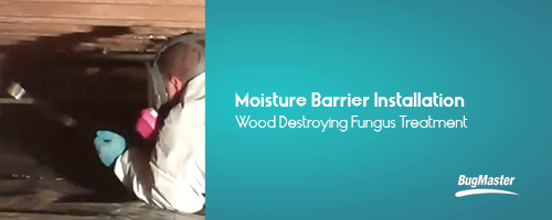 BUG_moisturebarrier_services_blog