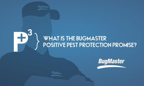 BUG_positivepest_post