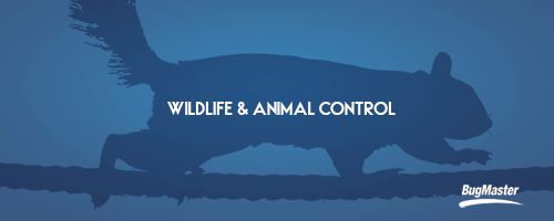 BUG_wildlife_services_blog