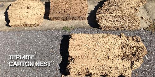 BUGMASTER_termite_cartonnest