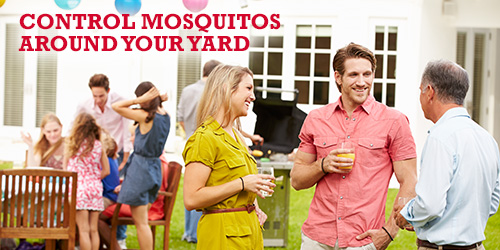 Control Mosquitos Around Your Yard